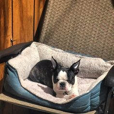 Outside dog bed is best dog bed #bostonterrier #bostonterriersofinstagram #dogsofinstagram #dogstagram #bostonterrierlove #bostonterriersforever #bostonterriercult #puppy by lulu_on_the_internet