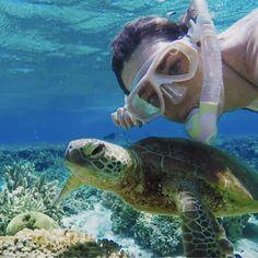Let's tackle ocean plastics, shall we? Laura Wells, Ocean Turtle, Great Barrier Reef, Spam, Instagram Posts, Model, Travel, Viajes