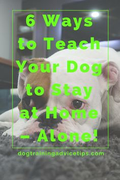 Separation Anxiety is common in dogs. If your dog is facing this issue, then care for your dog by finding out the 6 Tips to Teach Your Dog to Stay at Home – Alone! http://www.dogtrainingadvicetips.com/teaching-dog-stay-home-alone