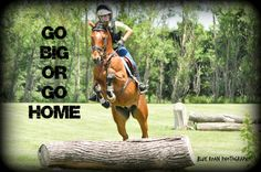 Blue Roan Photography Equine Photo Shoot Horse Quotes and Edits Cross Country  Horses Horse Photo Shoot Horse Love
