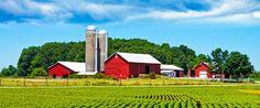 Les agriculteurs sont fous - mais ils aiment leur métiier - agrimom