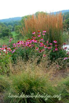The coneflower really pops when surrounded by the soft texture of two grasses.