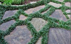 Dwarf Mondo Grass is an evergreen groundcover that looks like turf.very deep green turf that is! Dwarf Mondo Grass is an evergreen groundcover that looks like turf.very deep green turf that is! Grass Pavers, Garden Pavers, No Grass Backyard, Garden Steps, Backyard Landscaping, No Grass Yard, Garden Grass, Tropical Backyard, Backyard Privacy