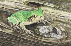 """""""Tiny Treefrog"""" Frog Art by Sue deLearie Adair"""
