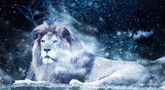 Êtes-vous prêt pour le Portail du Lion? Voici certaines choses à connaître. La période astrologique du Lion s'étend du 23 juillet au 22 août. Entre ces