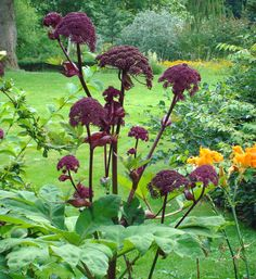 Specializing in rare and unusual annual and perennial plants, including cottage garden heirlooms and hard to find California native wildflowers. Permaculture, Hummingbird Garden, Side Garden, Unusual Plants, Colorful Garden, Flower Farm, Types Of Plants, The Ranch, Summer Garden