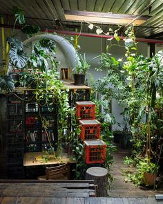 Mathieu Gallois indoor garden as featured on The Planthunter | Issue 9 | ON THE ROAD Image captured by: Daniel Shipp