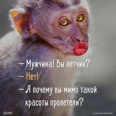 """Юмор Поговорки, афоризмы и шутки - Всегда найдется пара минут для это. <a href=""""https://www.natr-nn.ru/blog/category/entertainment"""">Еще больше постеров</a>"""