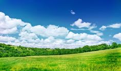 green-grass-nature-and-blue-sky-preview.jpg (980×581)