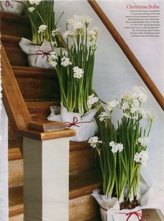 63 Best Paperwhites Images In 2019 Planting Flowers Beautiful