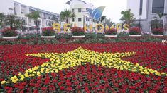 những chậu hoa cây cảnh tết 2020 vẻ đẹp bắc ninh Bonsai Art, Life Hacks, Recycling, Garden, Creative, Plants, Handmade, Garten, Hand Made