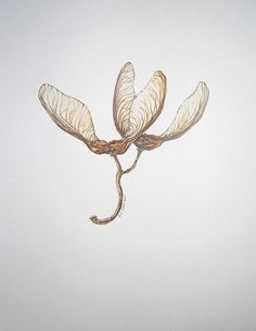 Art  Woodland  Home Decor  Maple Seed Pod III  by Worksonpaperart, $18.00