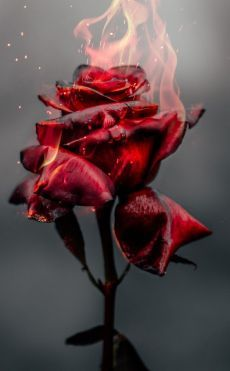 Burning Rose, fire, red flower wallpaper Roses include the main items that give us Red Flower Wallpaper, Vintage Wallpaper, Dark Wallpaper, Wallpaper Backgrounds, Iphone Backgrounds, Red And Black Wallpaper, Iphone Wallpaper Fire, White Roses Wallpaper, Cool Pictures For Wallpaper