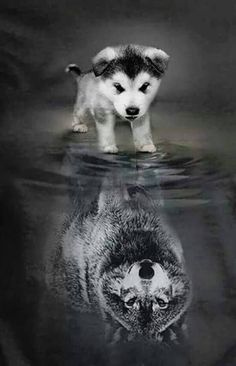 New Free of Charge dogs and puppies water Style Perform you care about your puppy? Suitable dog health care plus coaching will you and you Baby Animals Pictures, Cute Animal Pictures, Funny Animals, Cute Cat Wallpaper, Animal Wallpaper, Cute Puppies, Dogs And Puppies, Wolf Spirit Animal, Cute Animal Drawings