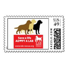 >>>Best          	Save A Life Adopt A Lab Stamps           	Save A Life Adopt A Lab Stamps Yes I can say you are on right site we just collected best shopping store that haveShopping          	Save A Life Adopt A Lab Stamps Online Secure Check out Quick and Easy...Cleck Hot Deals >>> http://www.zazzle.com/save_a_life_adopt_a_lab_stamps-172368567677269044?rf=238627982471231924&zbar=1&tc=terrest