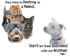 They tried to destroy us & failed…