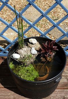 Lisa's Life: Sunday mini pond. It really is that easy to create #homesfornature!