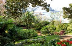 Wendy Whiteley's famous secret garden in Lavender Bay, NSW. Photo – Daniel Shipp for The Design Files Lavender Garden, Lush Garden, Veg Garden, Garden Boxes, Sydney Gardens, Picnic Spot, Small Waterfall, The Design Files, Good Dates