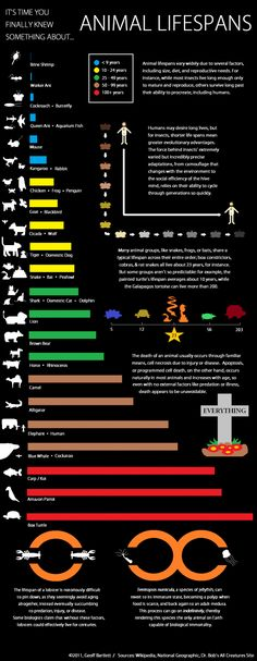 Animal Lifespan Infographic. Fascinating information! Who knew that chickens, frogs, and penguins live approximately the same amount of time?