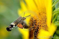 kolibrie-15185499.jpg