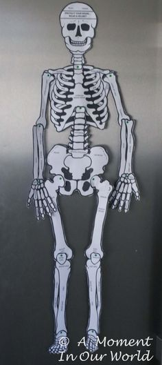 Skeleton 1