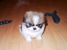 Angry boy. Grrrr