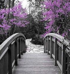 Lavender  & Gray I
