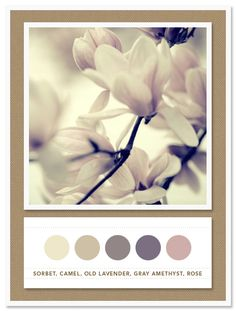 Colour Palette: sorbet, camel, old lavender, grey amethyst, rose