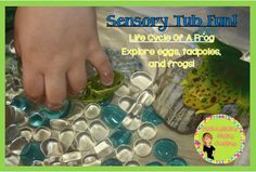 Sensory Tub Fun! Learn about the life cycle of a frog in a water table. Differentiation Station Creations