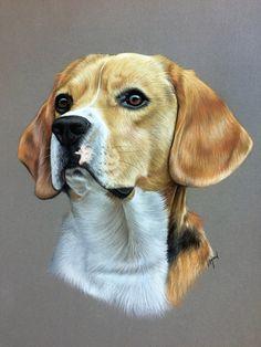 Beagle dessiné au pastel