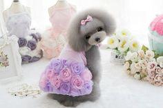 Evening Dresses 3 Styles Adorable High-End Luxury 3D Rose Pet Dog Wedding Gown Beautiful! #miniaturepinscherlovers