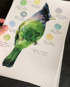 Sketching birds by Polina Bright – Aquarelle paint Watercolor Landscape Paintings, Watercolor Bird, Watercolour Painting, Painting & Drawing, Watercolors, Arte Sketchbook, Bright Art, Watercolour Tutorials, Bird Drawings