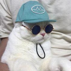 @soonmoo_cat