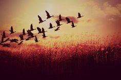 Sunset! by Danist Peng, via 500px