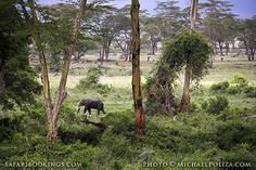 #Elephant in a forested area @ Ngorongoro Conservation Area in #Tanzania. See our #Ngorongoro travel guide: http://www.safaribookings.com/ngorongoro
