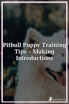 Pitbull Puppy Training Tips – Making Introductions Hypoallergenic Dog Treats, Best Dog Costumes, Dog Seat Belt, Living With Dogs, Puppy Training Tips, Orthopedic Dog Bed, Cool Dog Beds, Large Dog Breeds, Small Breed