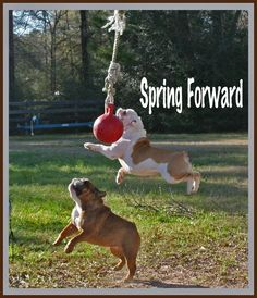 Remember Sunday morn, Spring Forward to Daylight Savings time!