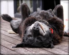 Contented old dog. Image by Bill Harrison