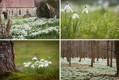 Welford Park, Berkshire snowdrops