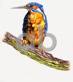 Ilustração de animais