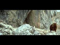 L'OURS (1988) de Jean -Jacques Annaud. Film complet en français. you tube