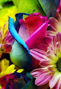 Gorgeous Colors! Colors