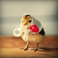 Cute chick ...