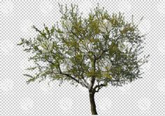 Spring time broad-leaf tree cutout by Gobotree