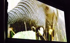 NALEDIfilm screening in Geneva started at Palais des Nations on WildforLife Baby Elephant, Geneva, Environment, Events, Elephant Baby, Baby Elephants, Environmental Psychology