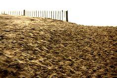 Dune di Coubre