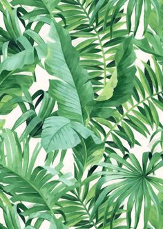 Transform your home into a vacation with tropical print wallpaper! Tropical wallpaper classically features palm trees, ocean and beach wildlife, and all the elements you might find on a dream vacation to the tropics. Tree Wallpaper White, Palm Leaf Wallpaper, Tropical Wallpaper, Botanical Wallpaper, Print Wallpaper, Peel And Stick Wallpaper, Wallpaper Roll, Wallpaper Jungle, Adhesive Wallpaper