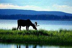 Eagle Wing Resort on Lake Kabetogama in Voyageurs National Park