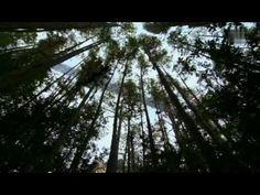 Die Entstehung der Erde - Wie alles begann ( volle Doku / Dokumentation / 90min. )