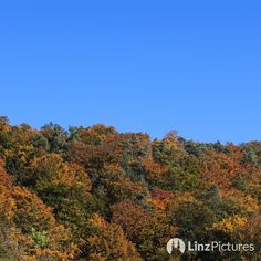 #herbst  . . #autumnporn . . . #autumn #urfahr #linz #igerslinz #mühlviertel #upperaustria #österreich #oberösterreich #happyface #igersaustria #linzer #wanderlust #hiking #draußen #landschaft #landscape #nature #gelb #streetsoflinz #noselfie #red #colors #view